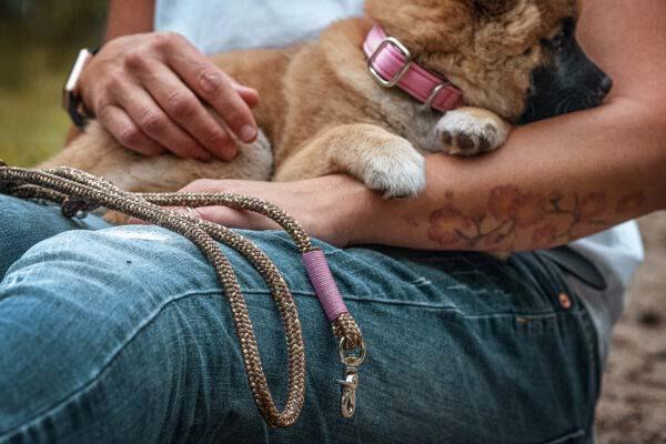 rosa Welpenhalsband mit Leine (gold digger ROSE)