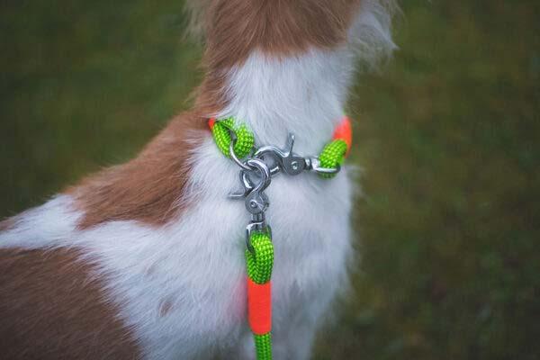 Leinen- und Halsbandset Green Peafowl KARLIE (Kletterseil)