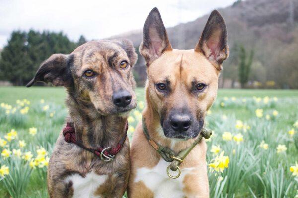 Zugstopp Olive Grove MOSSY (Kletterseil) und ZUgstopp stag beetle RANA an Hund Mateo & Rana