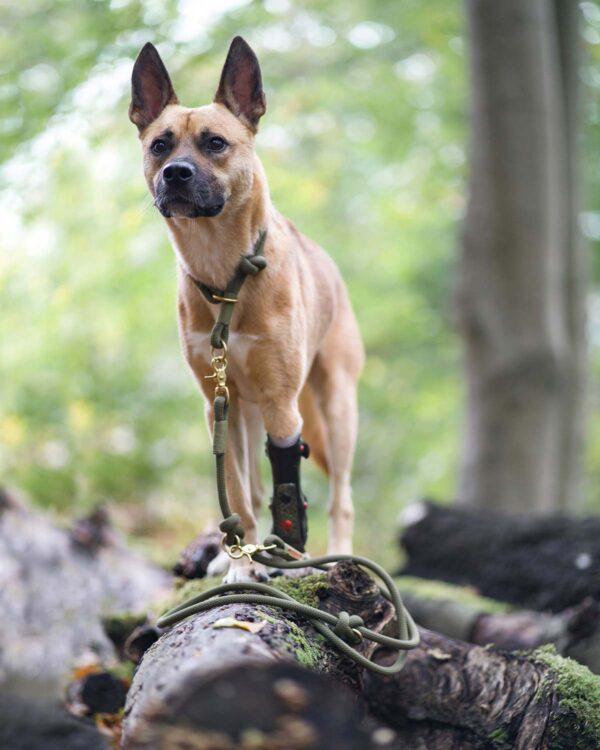 Zugstopp und Leine an Hund Mateo - Farbkombi Olive Grove MOSSY (Kletterseil)