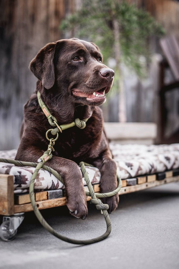 Leine und Zugstopp Olive Grove Kletterseil an Labrador NEPI
