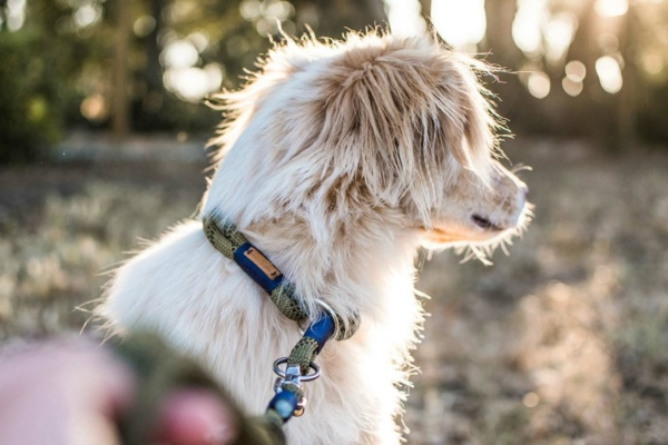 Zugstopp und Leine Olive Grove NAVY am Hund