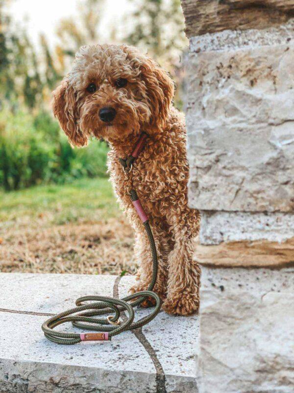 Verstellbare Leine Olive Grove Rose (Softtau) an kleinem Hund in 8mm