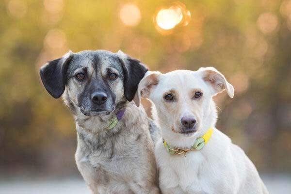 Feste Halsungen an zwei Hunden