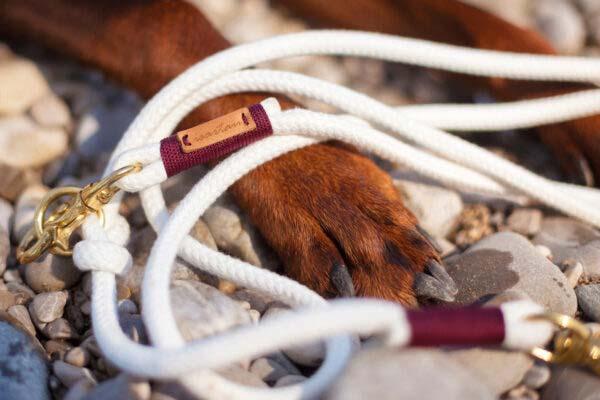 Halsband und Leinen Set Pure Breeze BOUNTY am Dobermann