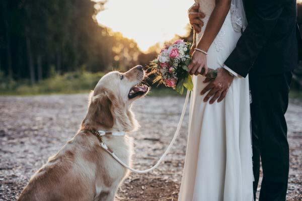 Hochzeit mit Retrieverleine mit Handschlaufe Pure Breeze SAY YES an Goldie