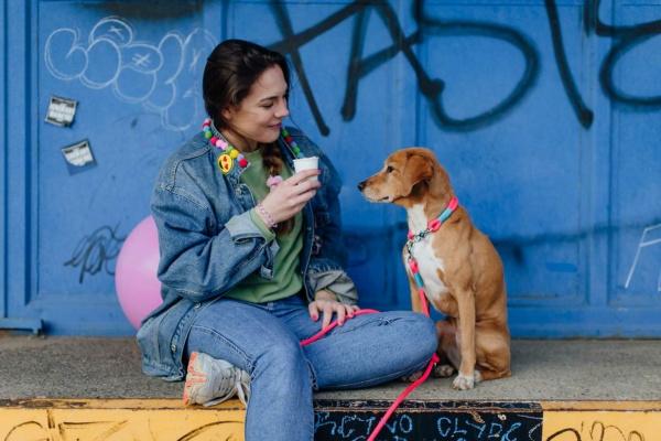 Feste Halsung mit Leine in Farbkombi Pink Lady AZUR an Hündin Sita