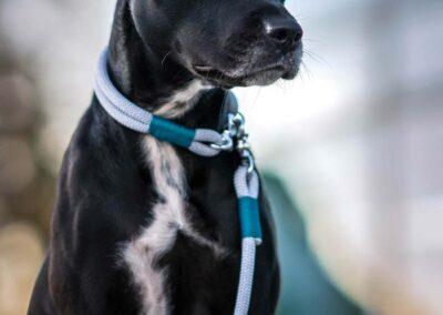 Halsband und Leinen Set in der Farbkombination Pebble Stone FIETE an Hund Jeanie