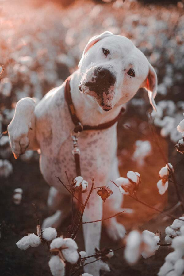 stag beetle RANA an Cooper, Dogo Argentino