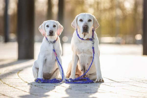 Trudi & Ivy mit ihren splendid street Kombis