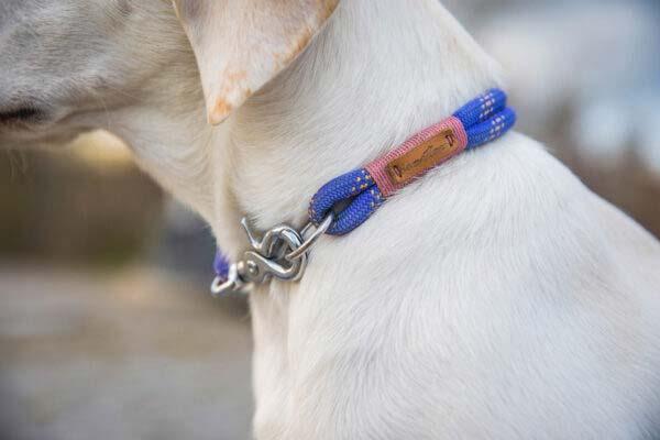 Festes Halsband an Trudi, Labrador