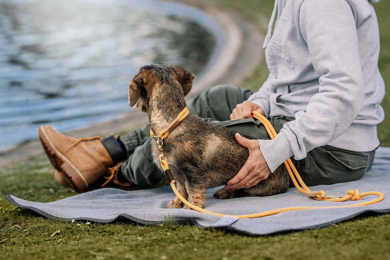 hochwertige Hundehalsbänder und Leinen