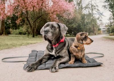 portable Hundedecke