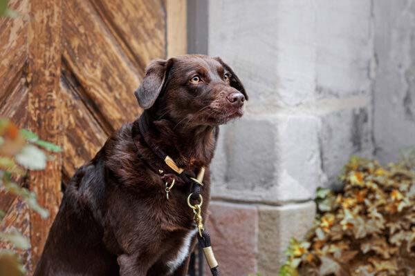 Ruby mit classy chestnut GOLDNUGGET Farbkombi